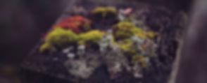 Tiny%20world_edited.jpg