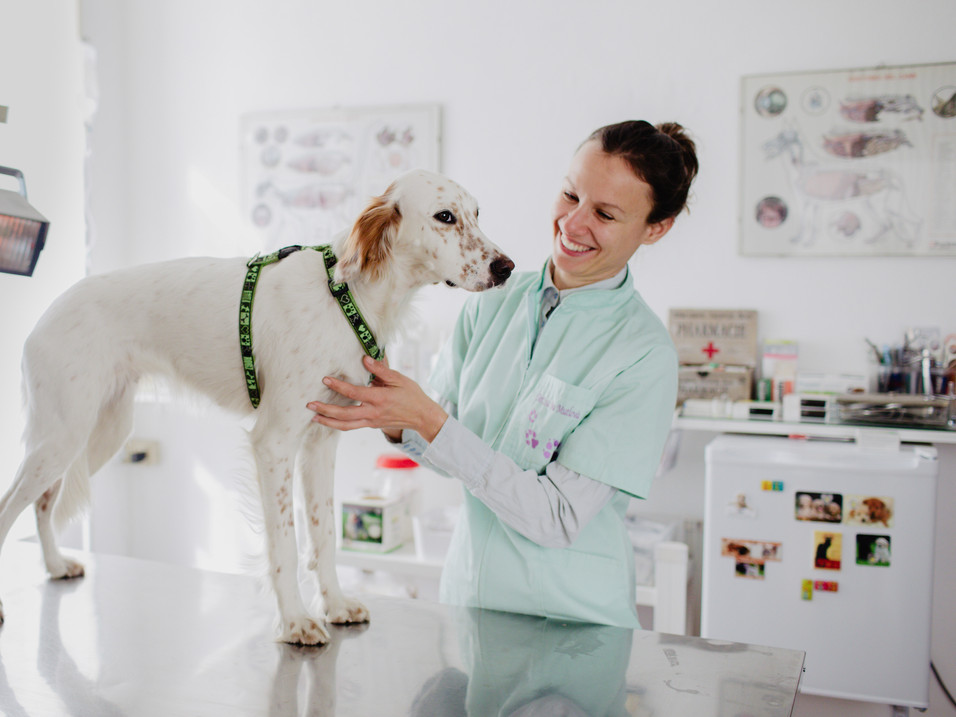 STUDIO VETERINARIO