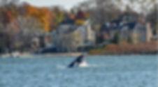 NESE Whale.JPG