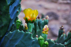 Cactus Florals