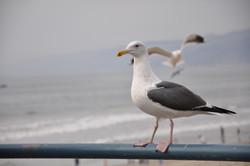 Sea Flight
