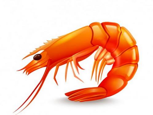 Shrimp DimSum กุ้ง