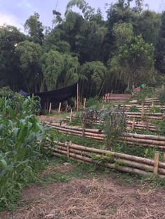 demostrative garden zone 1.jpg