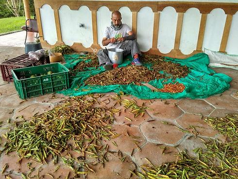 seeds crop.jpg