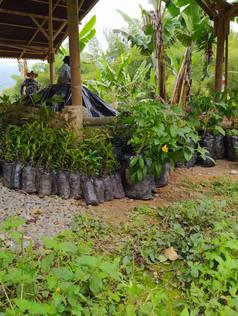 arboles to plant.jpg