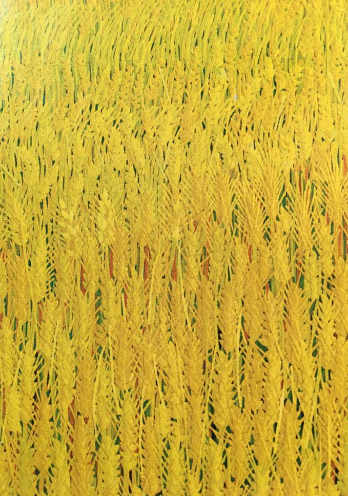 太陽と麦畑1_2