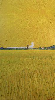 太陽と麦畑1