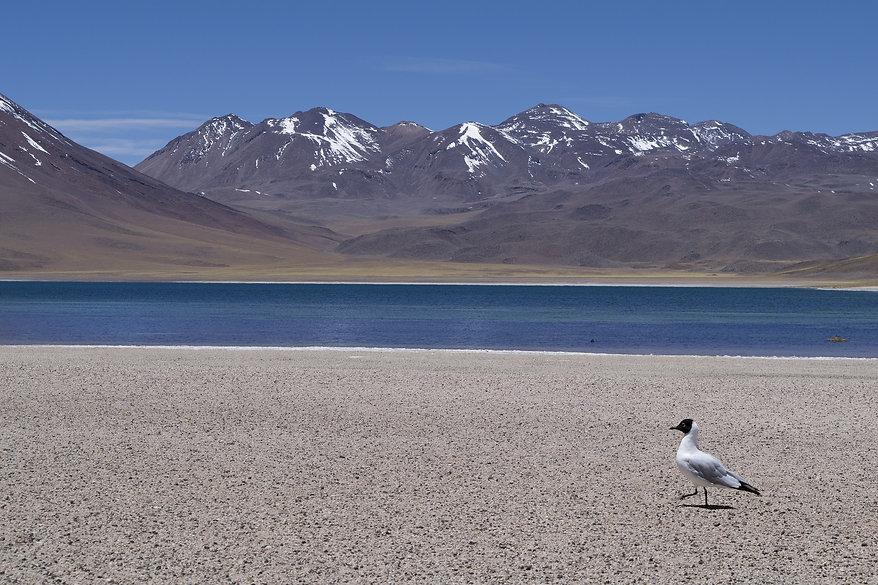 Chile - Volcanoes - Carlos Ruiz from Pix