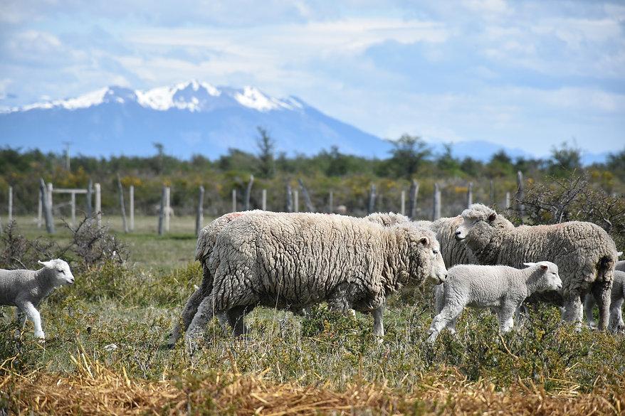 Patagonia - Götz Friedrich from Pixabay.