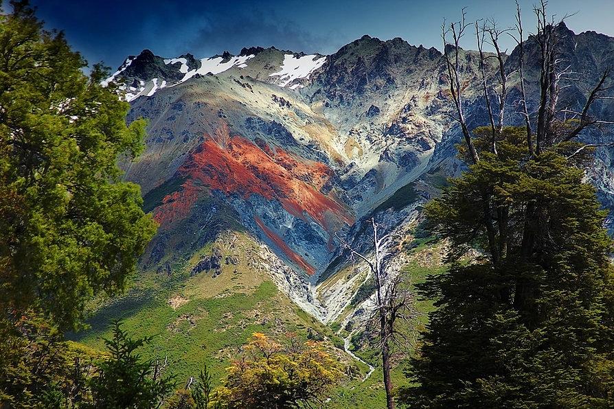 landscape-tree-nature-forest-wilderness-