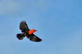 bird-wing-flight-vertebrate-argentina-co