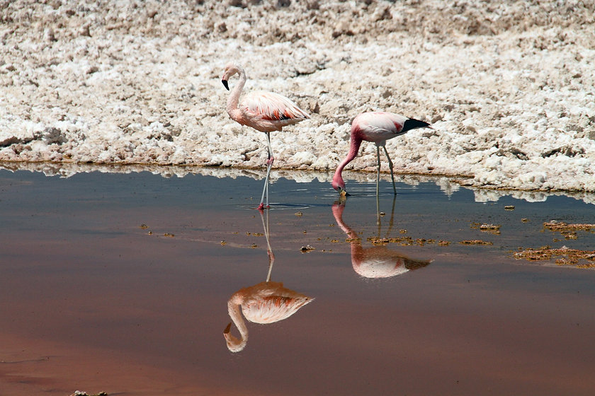 Atacama Desert - Monica Volpin from Pixa