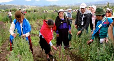 agricultura indigena.jpg