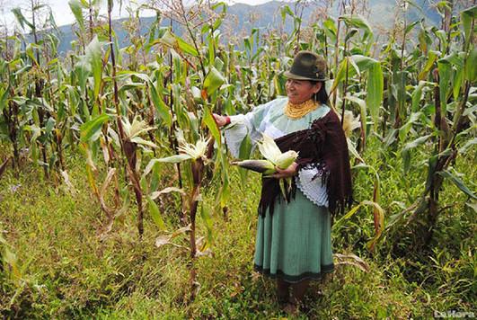 agrucultora de maiz.jpg