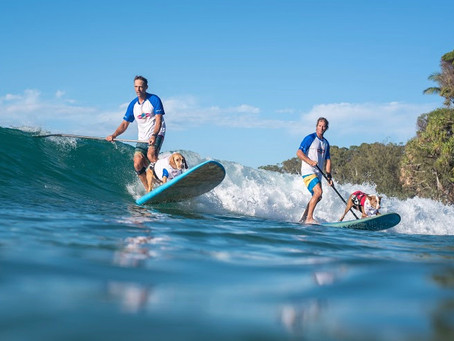 Events of Noosa and surrounds....