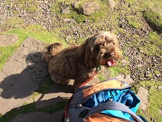 Polly on Blackford Hill