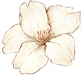 Large_flower_cream.png