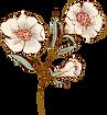 Three-cream_flowers.png