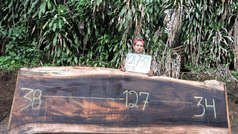 K21731 Parota Wood