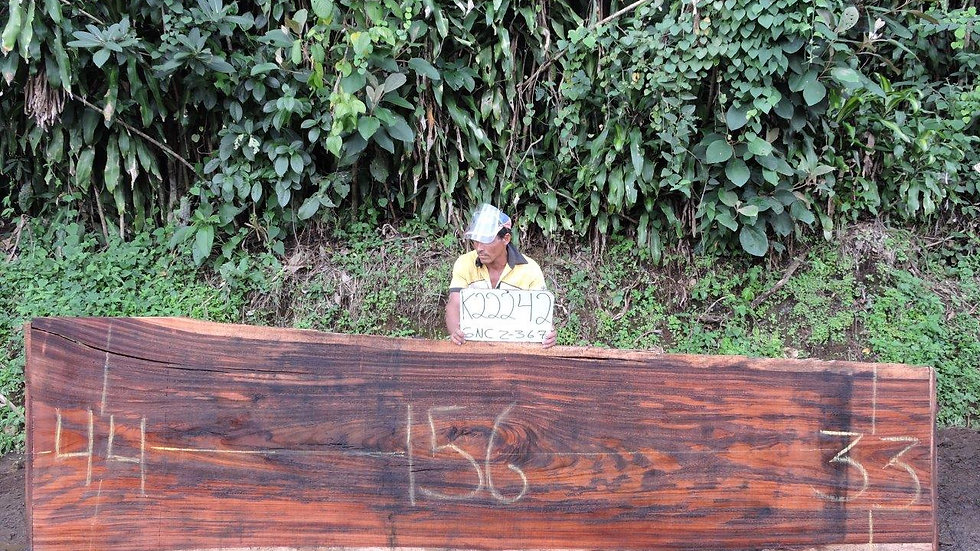 K22242 Parota Wood