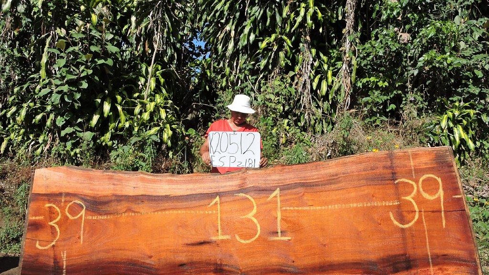 K20512 Wild Cashew/Espavel Wood