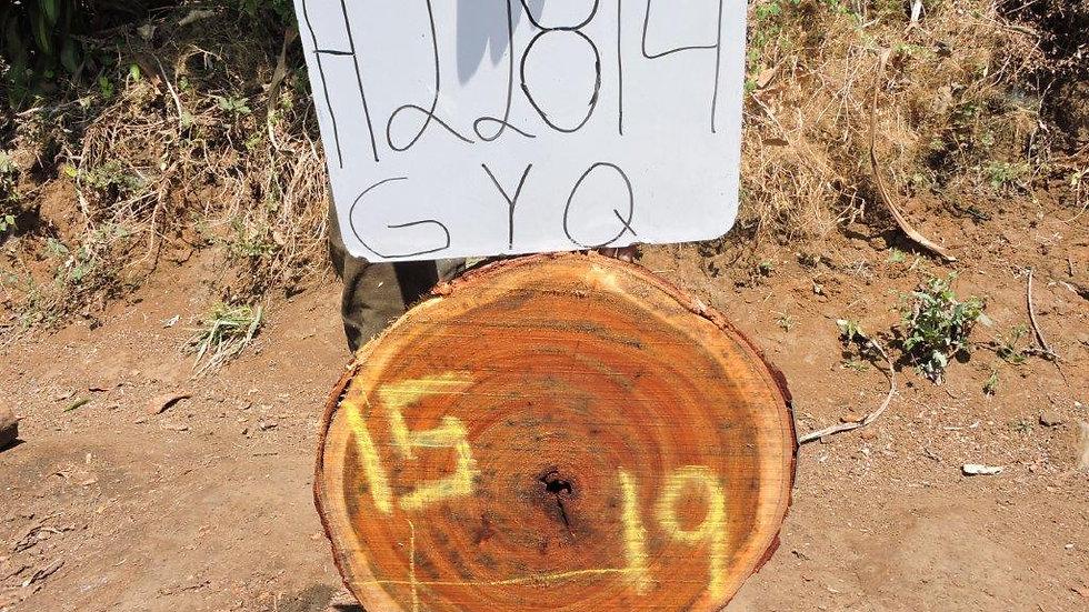 H22814 Chime Wood X Cut