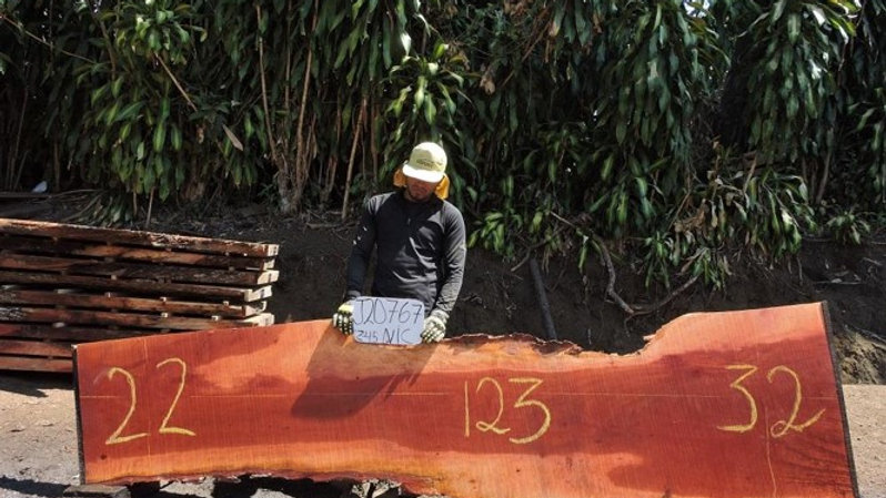 J20767 Bullet Wood/Nispero Chicle Slab