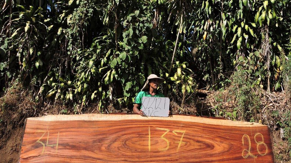K22121 Parota Wood