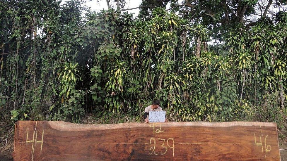 J21217 Parota Wood