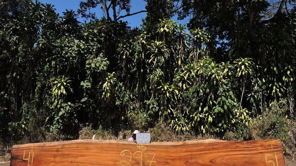 J21168 Parota Wood