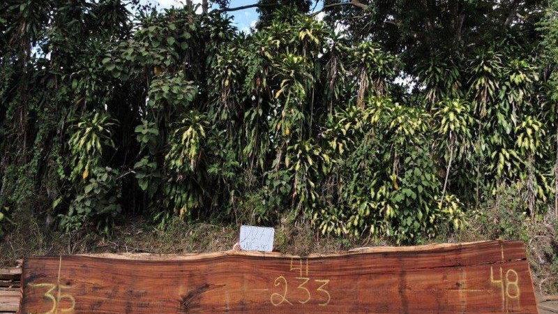 J21277 Parota Wood
