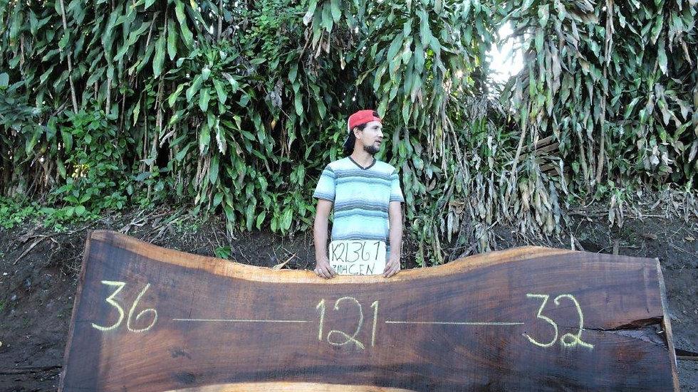 K21361 Monkey Pod Wood