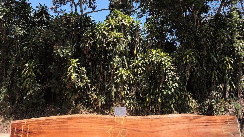 J21167 Parota Wood
