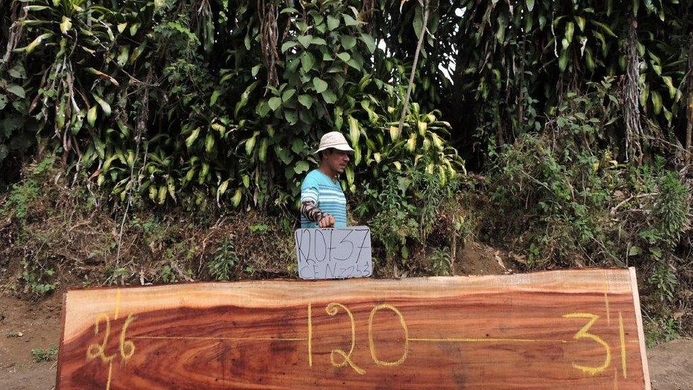 K20737 Monkey Pod Wood
