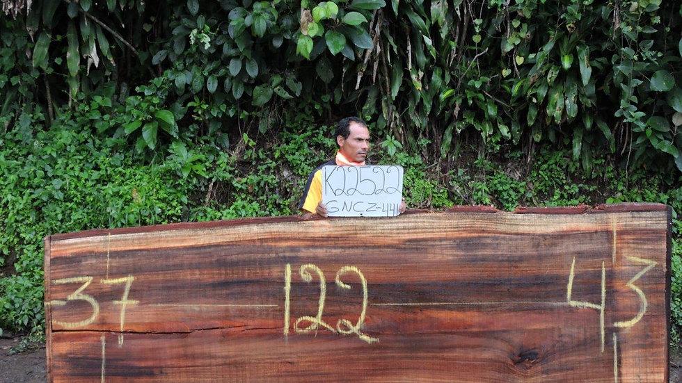 K22522 Parota Wood