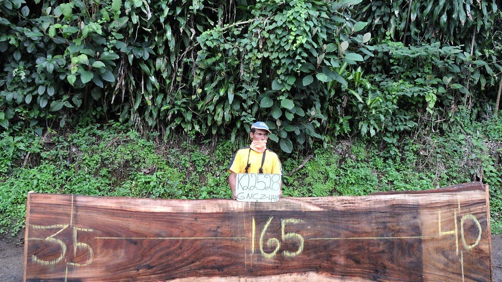 K22528 Parota Wood