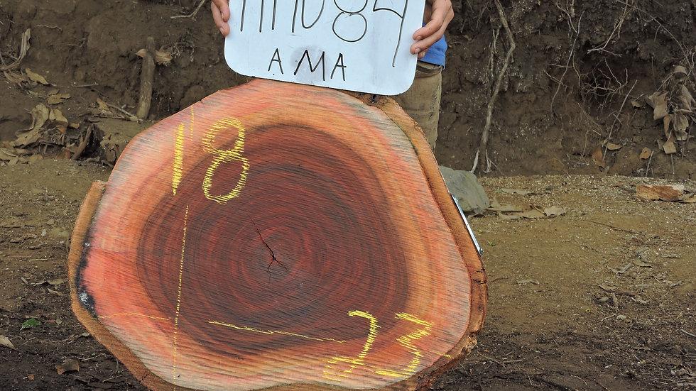H19084 Amarguillo Wood X Cut