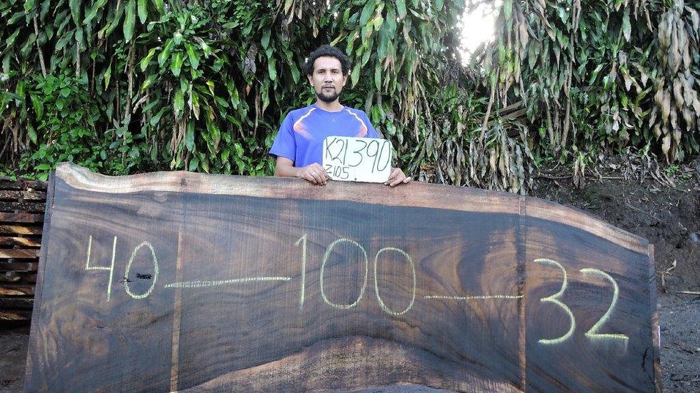 K21390 Parota Wood