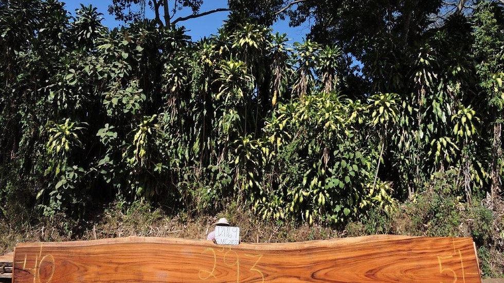 J21169 Parota Wood