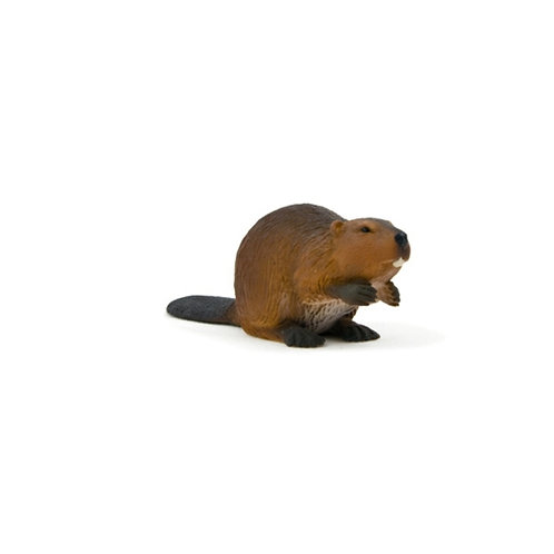 Animal Planet - Beaver