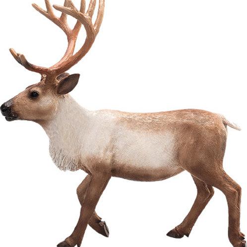 Animal planet - Reindeer