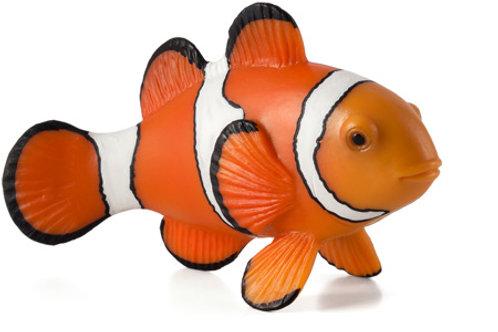 Animal planet - Clown fish