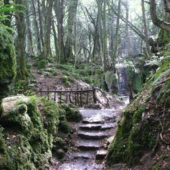 Did you know...Puzzlewood in the Forest of Dean was used as a set for Star Wars: The Force Awakens. Watch out also for fairies!.