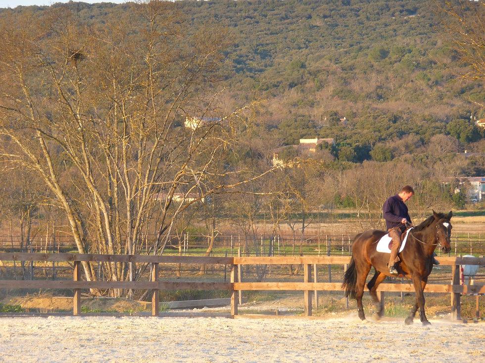 dressage du cheval dans un cadre naturel