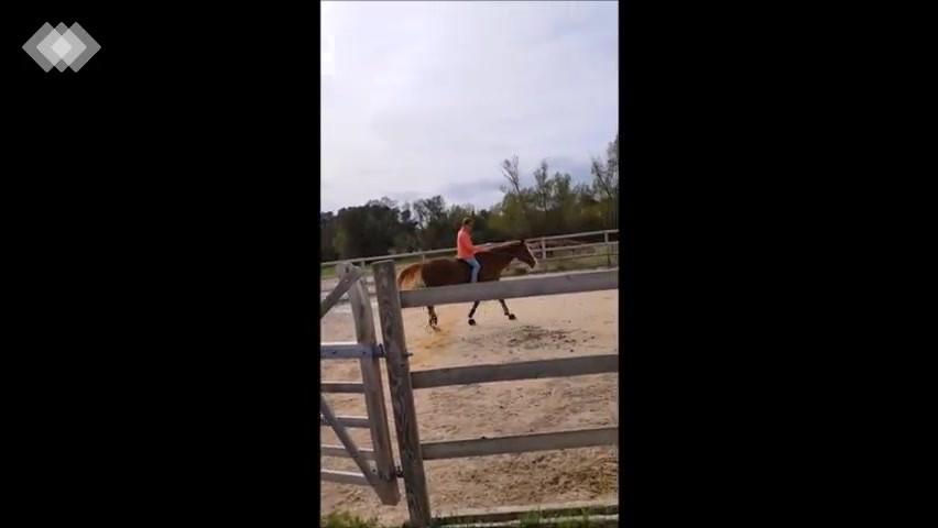 Travail d'un cheval de propriétaire