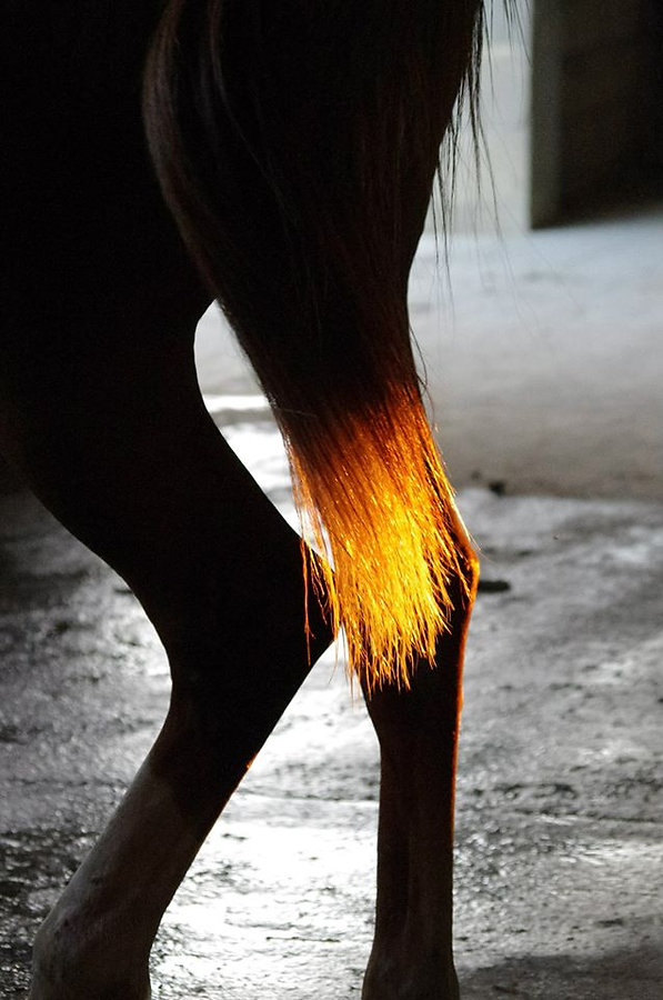 cours d'équitation leçons d'équitation Alès