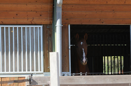 Pensions chevaux dans le Gard