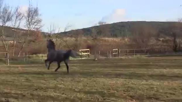 Un cheval joueur au pré