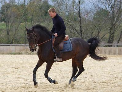 Les Écuries d'Artuzac débourrage redressage cheval