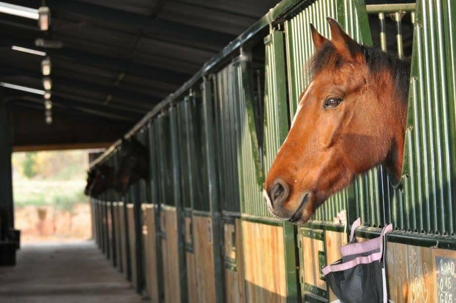 Les chevaux ne s'ennuient pas
